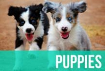 Puppies / Do we even need to explain this one? Just in case...puppies, puppies, and more puppies! / by American Kennel Club