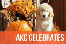 AKC Celebrates / What better way to celebrate our favorite holidays and events at AKC than with man's best friend? / by American Kennel Club