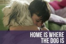 Home Is Where The Dog Is / Our favorite photos and more of dogs ruling the castle that we call home. Lots of lounging and playful dogs coming your way. / by American Kennel Club