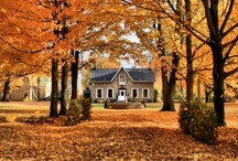 Autumn/Halloween/Thanksgiving / by Christine Mangiafico