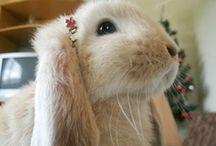 Konijnen / Alles wat met konijnen en creativiteit te maken heeft
