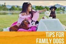 Tips For Family Dogs / Have a family dog? This is the perfect board for you. Tons of articles with helpful tips and information on how to be the perfect pup parent.  / by American Kennel Club