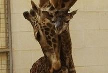 2 cute... <3 It! / by Susan M. Wermeling