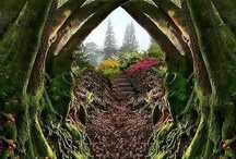 Garden / by Susan M. Wermeling