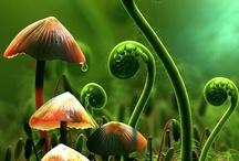 Mushrooms ;-) / by Susan M. Wermeling