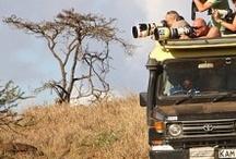 Madagascar | Safari | Jungla