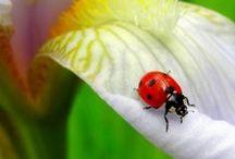 Ladybugs / by Susan M. Wermeling