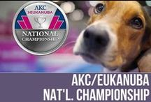 AKC/Eukanuba National Championship / Photographs and media of the beautiful dogs competing at the AKC/Eukanuba National Championship. / by American Kennel Club