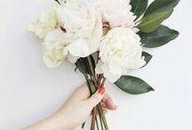 Blumen // flowers / by Dreierlei Liebelei