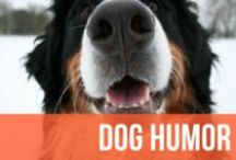 Dog Humor / We all love our dogs - especially when they're acting downright goofy.  Expect lots of dog memes, dog videos, and more to satisfy your daily dose of dog humor.  / by American Kennel Club