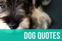 Dog Quotes / Our favorite quotes about dogs for all dog enthusiasts - from funny to meaningful and everything in between.  / by American Kennel Club