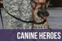 Canine Heroes / Inspirational news about dogs that have saved the day. Fair warning, you might need a tissue!  / by American Kennel Club