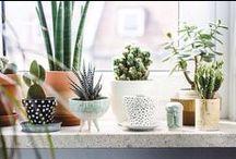 • Maison verte • Go Green • / Plantes, succulentes, cactus... Inspiration pour une maison plus verte