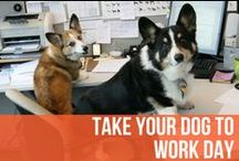 Take Your Dog To Work Day / At AKC, we love take your kid to work day. But of course we love take your dog to work day just as much - check out these adorable pups hard at work with their parents! / by American Kennel Club