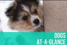 Dogs At-A-Glance / Beautiful infographics and helpful articles to keep you and your canine happy, healthy, and safe! / by American Kennel Club