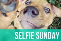 Selfie Sunday / Selifes...we're all guilty of taking them here and there - even the dog! The difference between us and the dogs? Every last one of these dog selfies are perfectly adorable. / by American Kennel Club