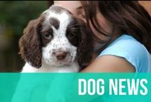 Dog News / Dogs are in the news constantly - either being goofy, heroic, or adorable. Anything we can find that's newsworthy and relevant, we'll post here for you to keep up-to-date on the latest dog happenings! / by American Kennel Club
