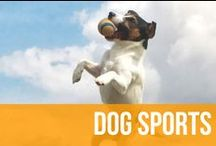Dog Sports / Anything pertaining to dog sports and agility training.  / by American Kennel Club