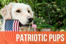 Patriotic Pups / Beautiful photos of pups decked out in red, white, and blue to celebrate America. These dogs are taking patriotism to the next level.  / by American Kennel Club