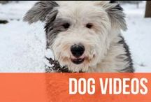 Dog Videos / There are way too many types of dog videos to just start listing them out in this description, so if there's an awesome video with a dog in it, you'll find it here. / by American Kennel Club