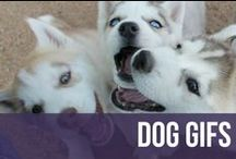 Dog GIFs / Dogs, puppies, and more dogs, in the form of GIFs.  / by American Kennel Club