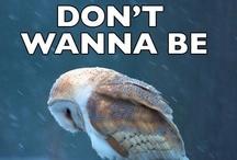 Owls and Wisdom / Wisdom, we all seek it