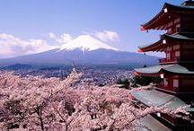 JAPAN-sakura-桜 / 桜の写真