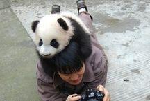 Awwww. / F*ckin' cute animals! Don't deny it.