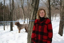 Maple in the News / Breaking Maple news throughout Vermont, New England and the rest of the United States.