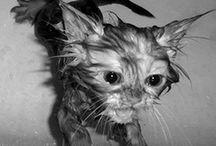 Kitties / by Sara Castillo