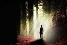 All things Twilight  / by Christine Ferrelli Smith