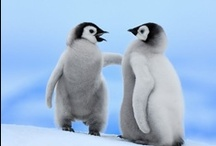 Penguins to Love / by Becky Williamson