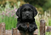 Love Labs / by Becky Williamson