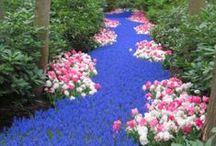 Gardening & Flowers / by Kelli Estes
