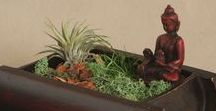 Terrariums & More / Plants aren't just pretty. They also bring positive energy and good vibes to your space. Buddha and Zen terrariums with moss and air plants are a peaceful addition to any room, combining spiritual imagery with relaxing greenery.