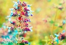 color / by Katy Resop Benway