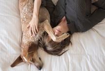 Dog days / Dogs