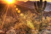 Arizona / My home state - where I was raised.  / by Carrie Landes Brigham