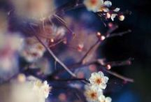 fleur / by Austin Zimmerman