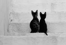 Cat Attack (aka cattack) / Cats