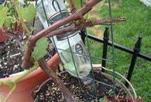 Dream Garden/Green Living / by A Lucky Ladybug