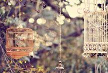 ~ Decoration ideas ~