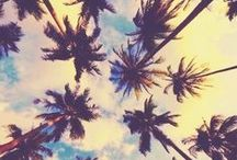 ☀ #Summer ~ Palm Trees ~ / We love palm trees! Don't you?