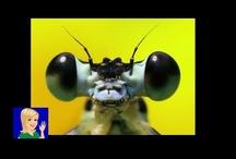 Insects DIY Preschool Theme / Cullen's Abc's DIY Online Preschool at CullensAbcs.com
