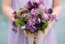 Violet • Purple