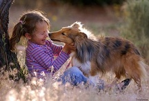 Sheltie Love / dogs, agility, etc. / by Kara