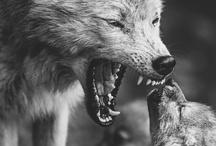 AnimalMan / Sobre a verdadeira natureza humana, sobre a amizade no mundo animal e a amizade entre humanos e os animais. Para não esquecer nossa verdadeira natureza nunca. / by Léo Begin