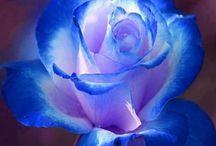 Colors--BLUE / by Faith Tatum