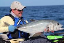 Saltwater Fish / A running list of the Saltwater fish species I've caught