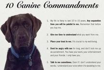 Dearest Dogs / #dogs #labs #labrador #retriever #animals  / by MJB Hewitt